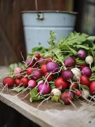 Russian mulit coloured radishes