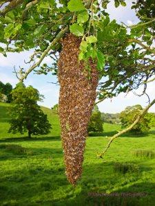 Honeybees 2