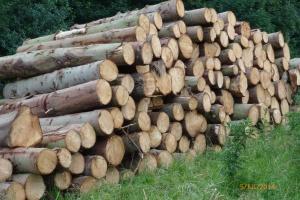 2014-07-05, Apley Walled Garden pine trees felled