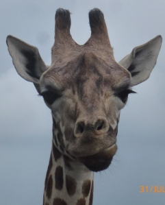 2014-07-31, West Midlands Safari Park (1)