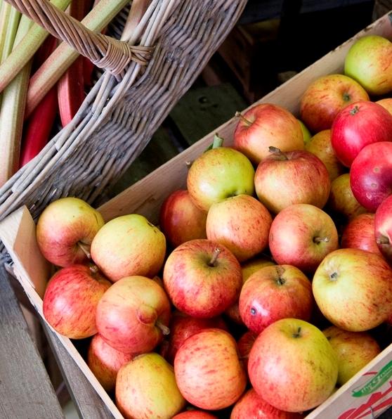 Apples & rhubarb, cropped