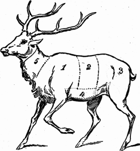 cuts-of-meat-venison