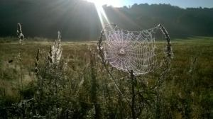 2014-09-01, Spider's web by Ian Edwards