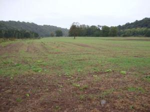 2014-10-14, oil seed rape, Apley Home Farm