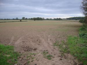 2014-10-14, wheat, Apley Home Farm