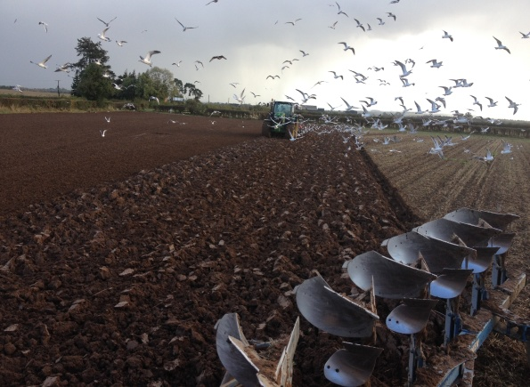 2014-10-21, Drilling winter oats