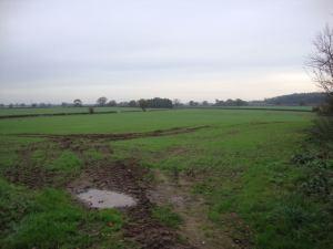 2014-11-06, Oil seed rape field at Home Farm