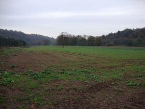 2014-11-06, Wheat field at Home Farm