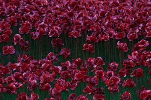 2014-11-11, Neil Harrison's Tower of London poppy art installation photo 2