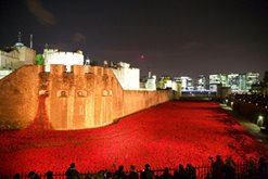 2014-11-11, Neil Harrison's Tower of London poppy art installation photo