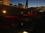 2014-11-12, Tower of London poppy art installation