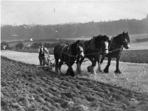 2014-11-19, Matthew Knight's photos - 3 Apley shire horses ploughing