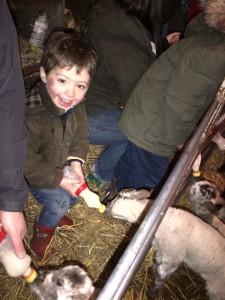 Francis bottle feeding lambs at Scotty's