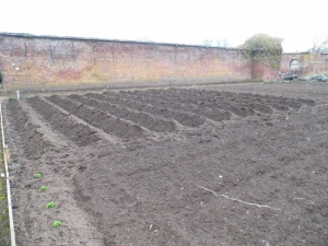 2015-18-03, First potatoes go in