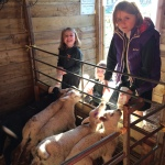 Lamb feeding at Scotty's Animal Park, Apley Farm Shop