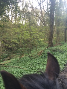 2015-04-16, H on Harry, Wild garlic glade dingle