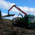 Apley poplar felling