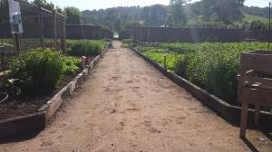 2015-06-04, AWG walled garden view down central path