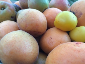 2015-08-06, Homegrown apricots 3