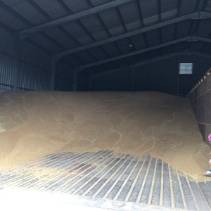2015-08-09, Grain store filling up