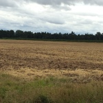 2015-08-09, Land cultivated with disc-aerator