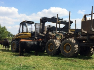 2015-08-12, Forestry equipment surrounded by curious Apley cattle (640x480)