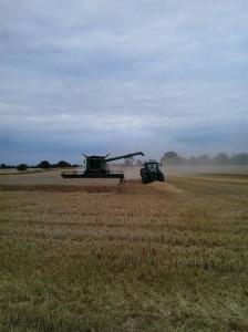 Harvesting Apley wheat