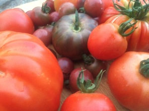 Apley Walled Gardens, heritage tomatoes