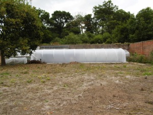 New polytunnel in Apley Walled Garden