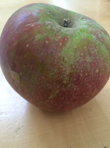 2015-09-24, Apley Farm Shop Cox apples