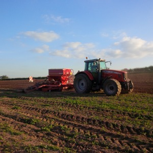 2015-09-30, Winter wheat drilling 4m drill, Grindle, Mike Buck