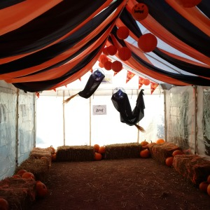 2015-10-15, Carving cavern, Pumpkin marquee decorated