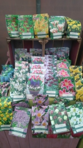2015-10-28, Apley Plant Centre bulbs