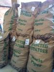 Maris Piper potatoes, James Tudor of Worfield