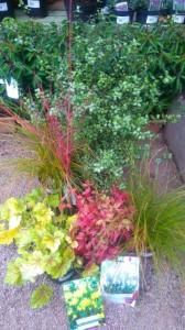 Apley Plant Centre end of season sale