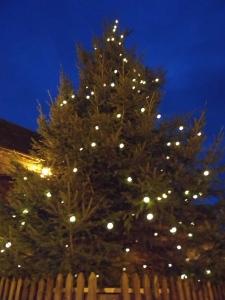 2015-11-11, Christmas Tree 3