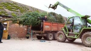 2015-11-11, Christmas tree (7)