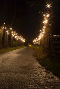 2015-11-28, Sparkly festoon lights, Steve Watts