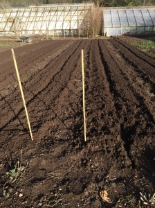 02-2016, Ground preparation for heritage carrots