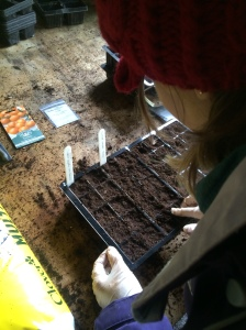 2016-02-08, Started sowing the tomatoes for the tomato festival