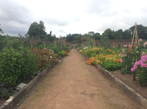 August 2015 - gardens back in production & looking lovely too
