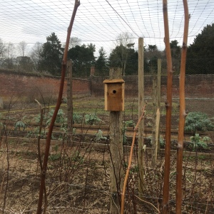 2016-02-29, Bird boxes in the fruit pen