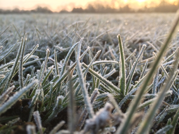 Taken on an iphone 5, this is almost the first frost I've seen all winter (2hrs south of Shropshire !)