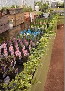 2016-02-26, Apley Plant Centre, Bulbs 9cm
