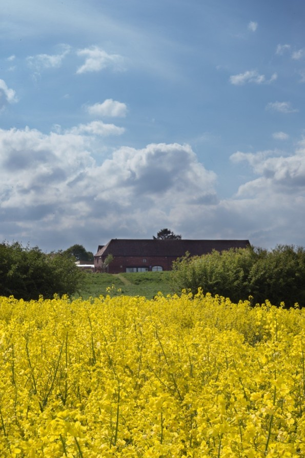 2016-05-30, Oil seed rape in flower in front of farm shop