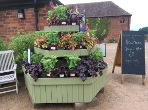2016-08-25, Apley Plant Centre heuchera display