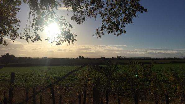 2016-10-18-apley-autumn-morning