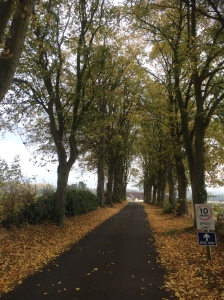 2016-10-26-autumn-leaves-falling-on-front-drive-of-apley-farm-shop