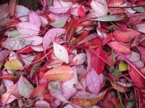 2016-11-07-autumn-leaves-3