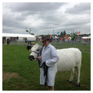 2016-11-18-penningtons-british-white-cattle-1